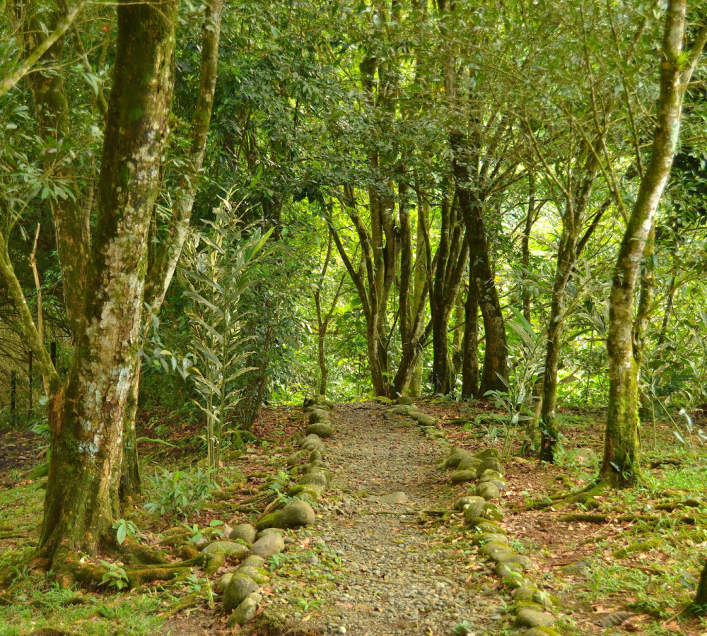 hiking trail in costa rica